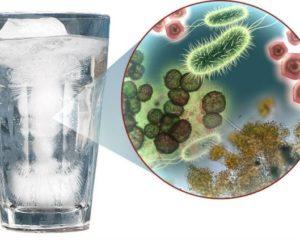 Микроорганизмы в воде – опасность «живой» воды
